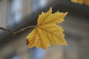 193942---Autumn-Leafweb_Full
